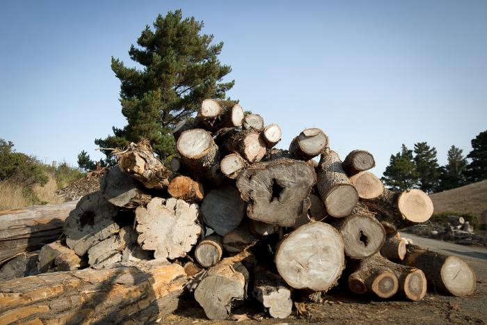 arborica-evan-shively-tree-trunks-woodpile-gardenista
