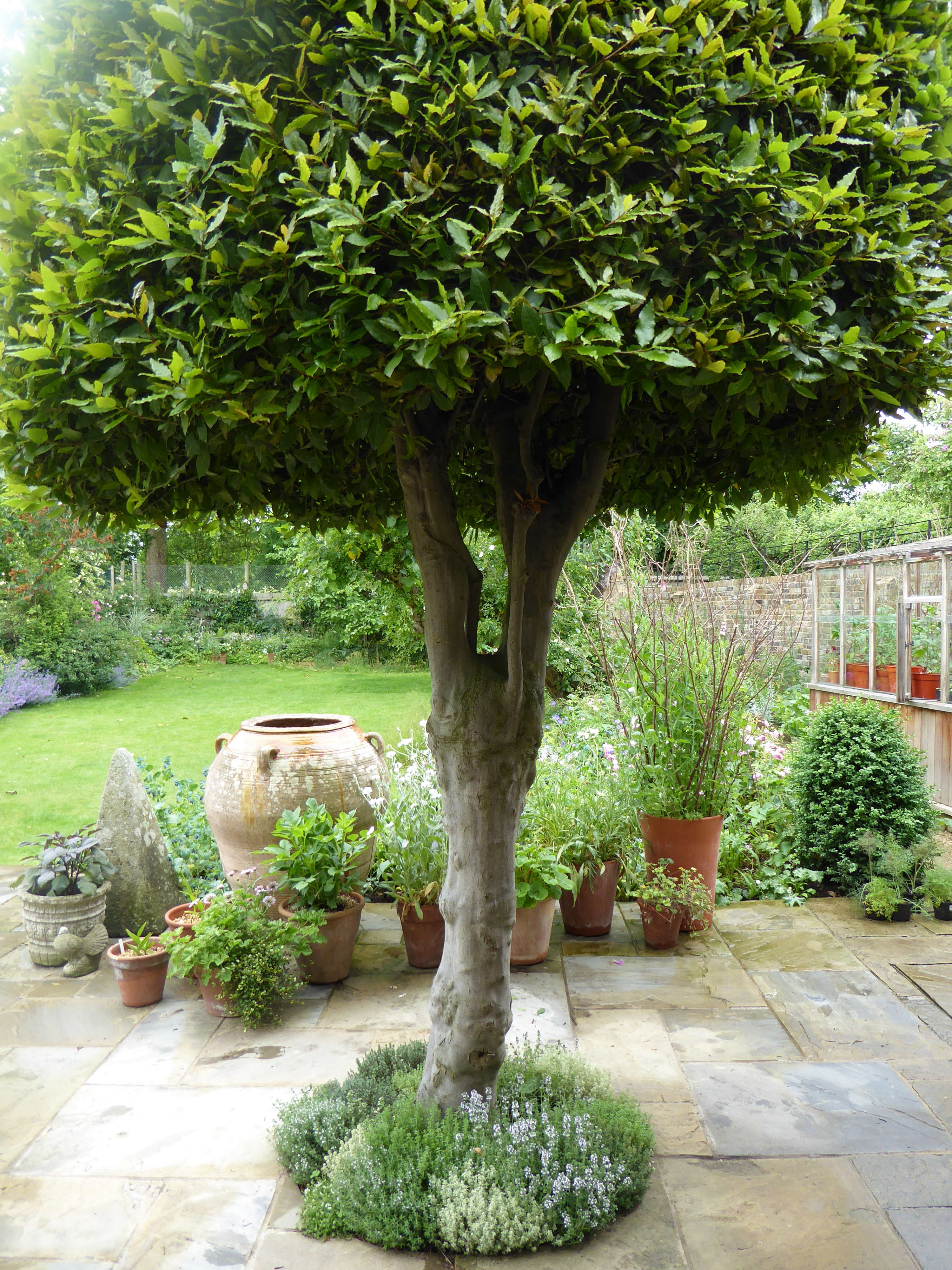 Garden visit at home with writer daisy garnett in london for Garden trees london