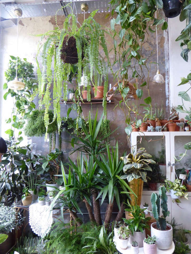 Shopper S Diary Conservatory Archives In East London