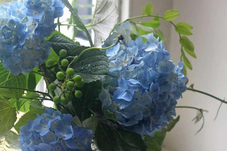 hydrangeas-blue-bouquet-grape-vines-gardenista