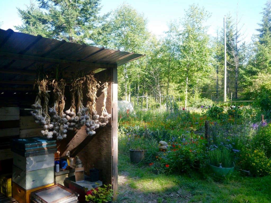garlic braids honey grove for gardenista by sylvia