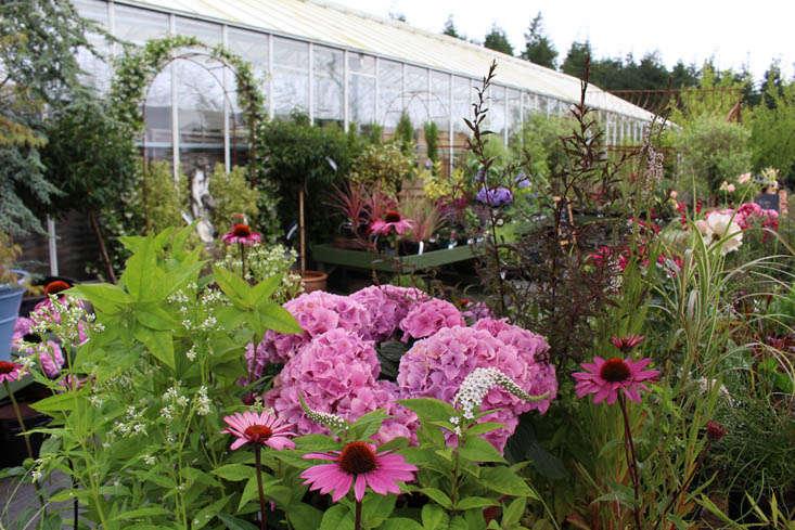 duchy-nursery-exterior-2-gardenista