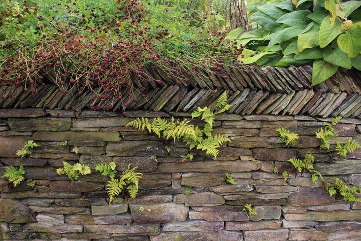 duchy-nursery-wall-gardenista