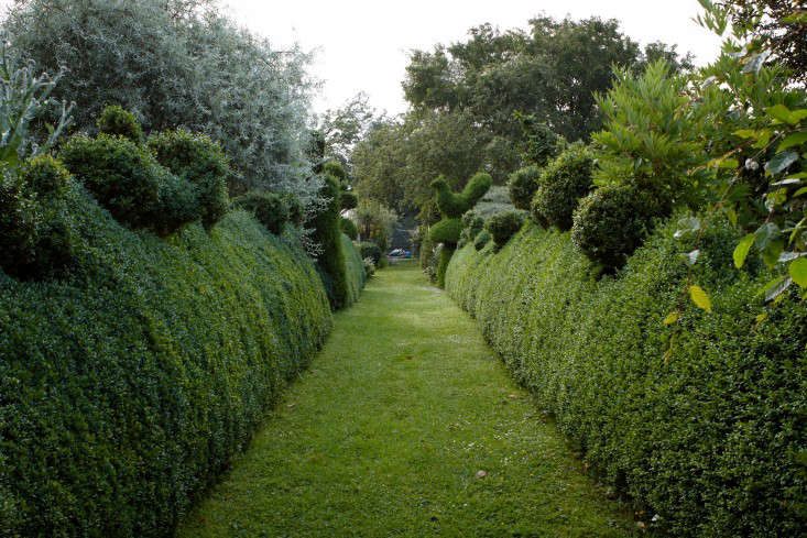Hardscaping 101: Hedges - Gardenista