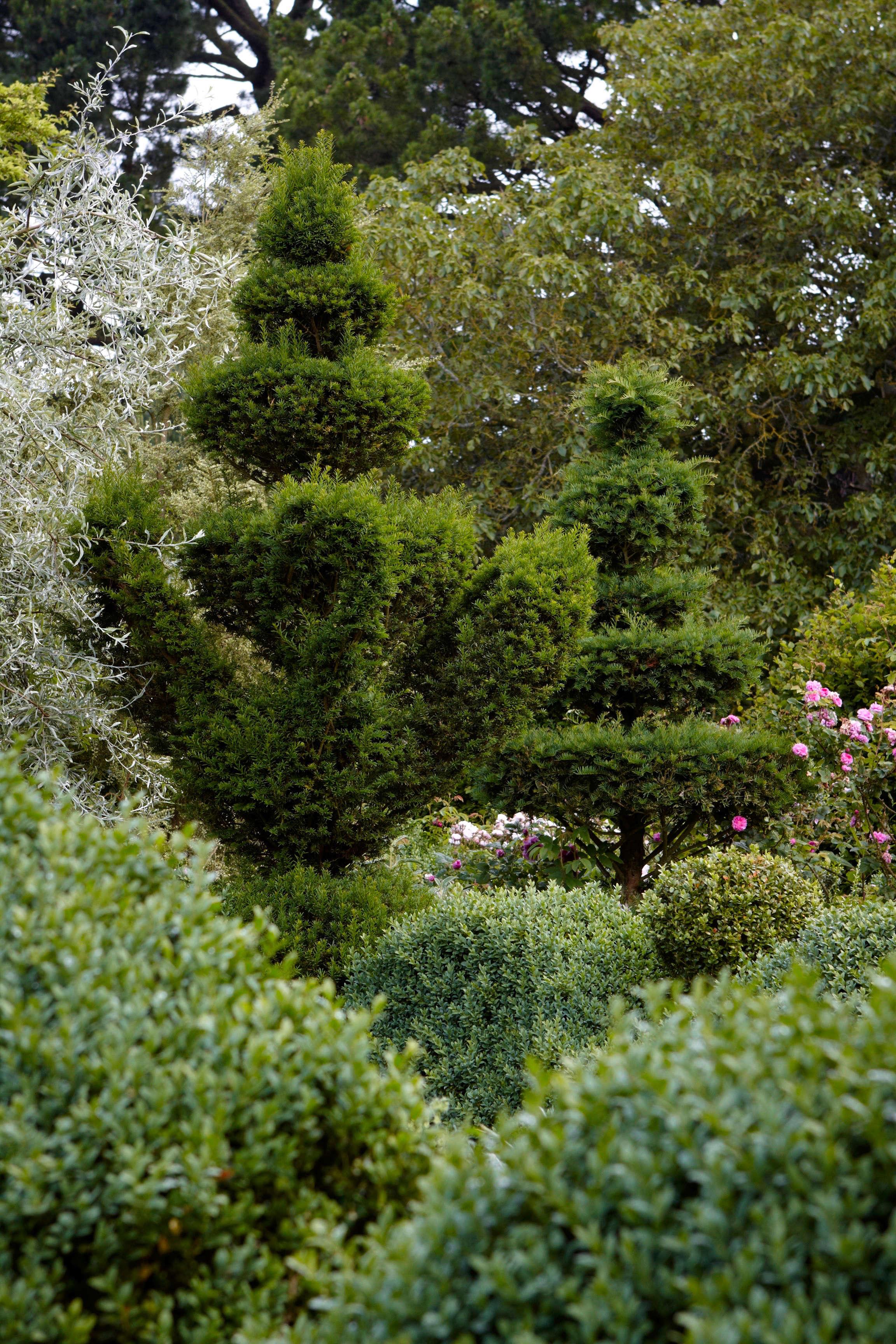 English Boxwood Is It Worth It Gardenista