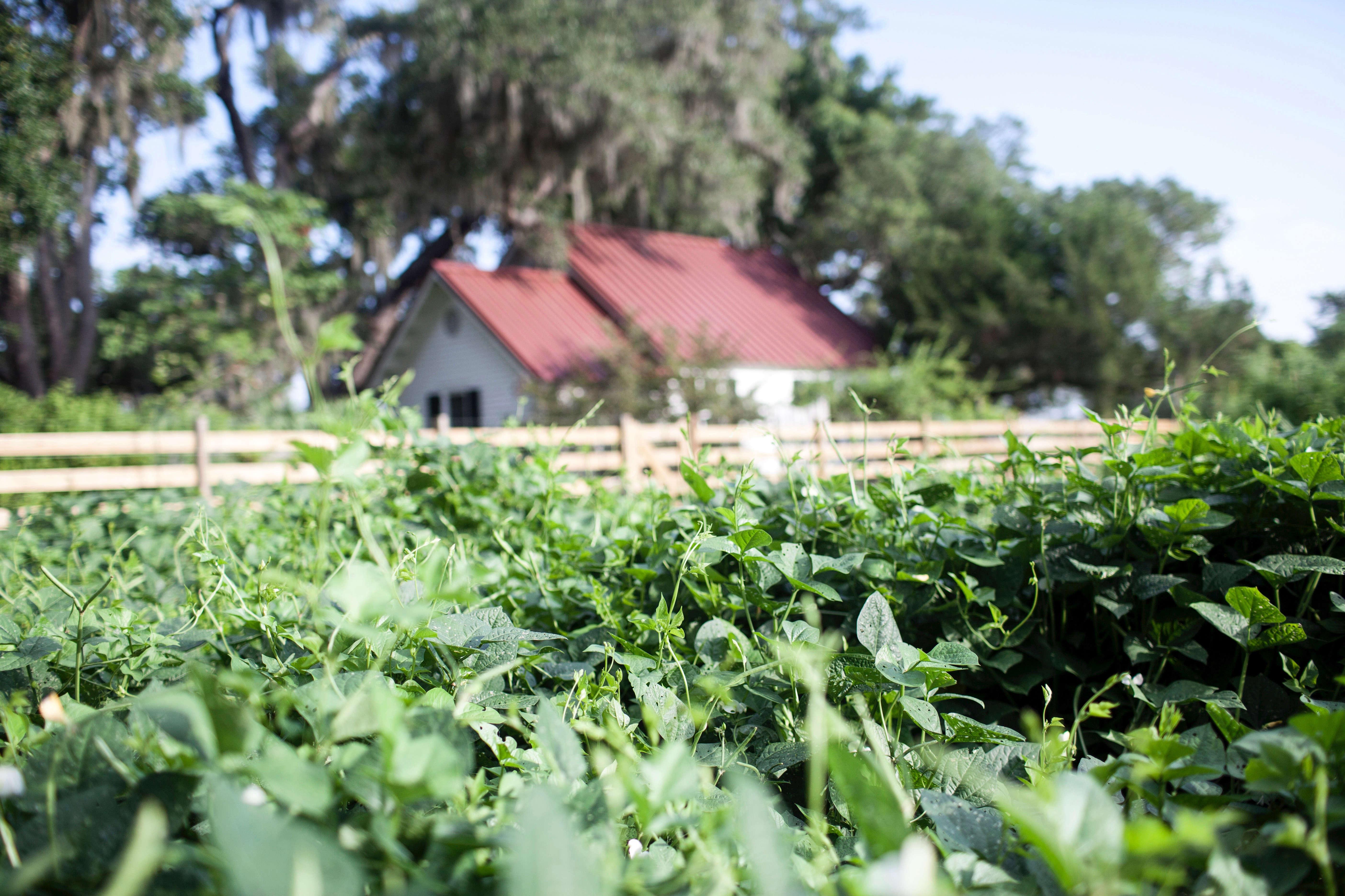 Greyfield Inn Kitchen Garden Fence