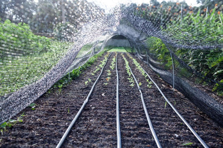 Hardscaping 101 Drip Irrigation Gardenista