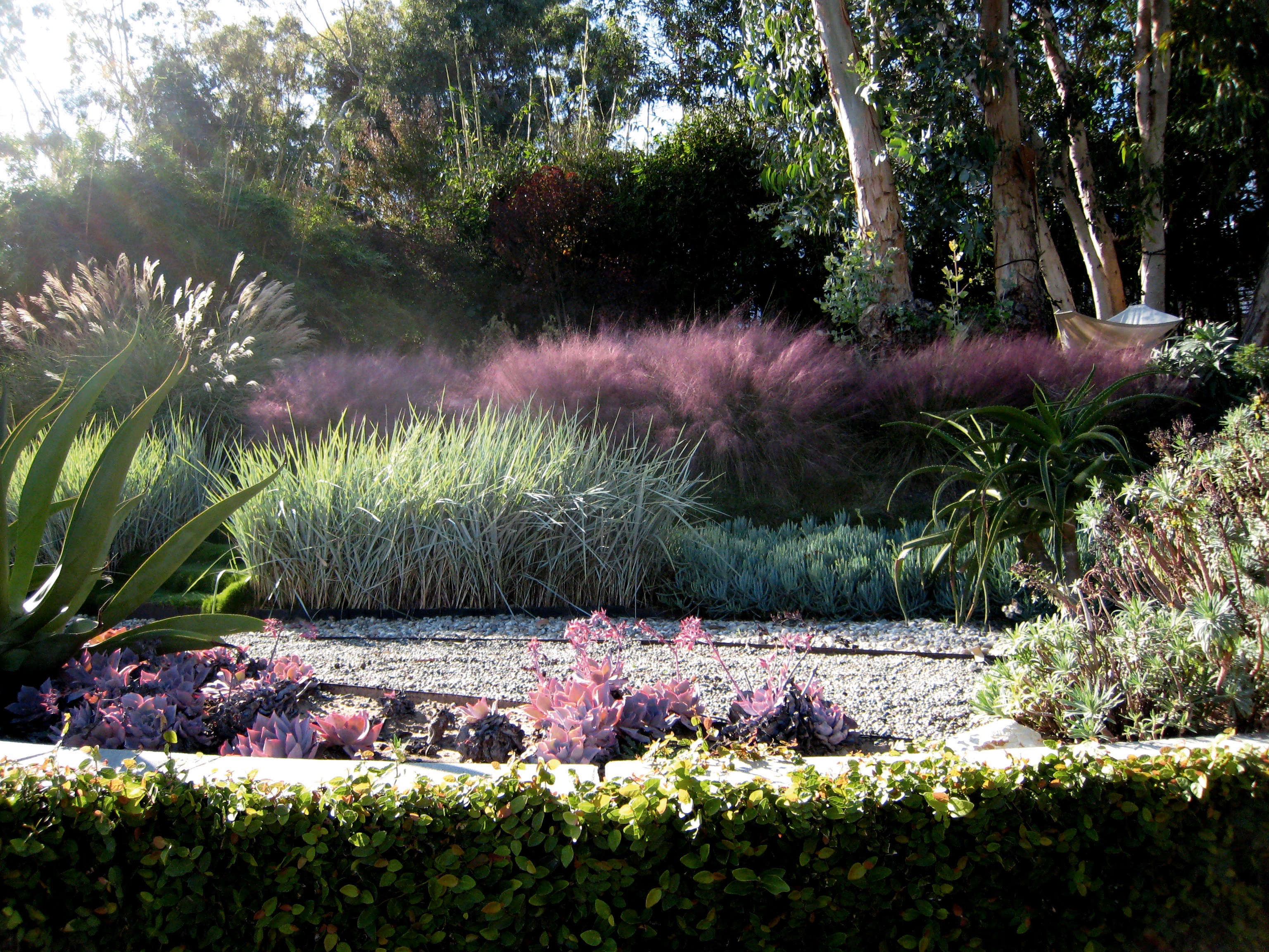 Pink grasses 11 ideas for muhlenbergia in a landscape for Garden plans with grasses