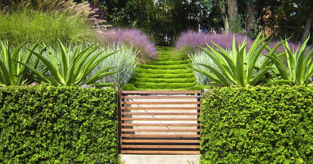 griffin-enright-muhlenbergia-slatted-gate-grasses-gardenista (1)