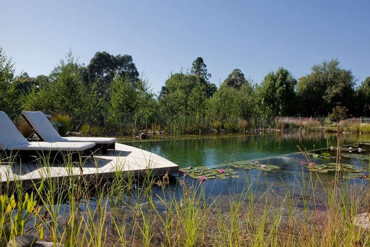 Hardscaping 101 natural swimming pools gardenista for Natural swimming pool australia
