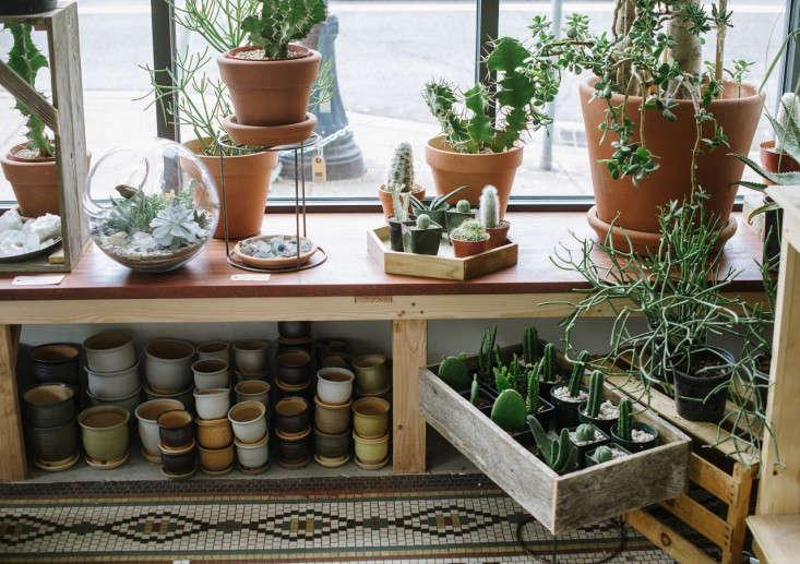 solabee_window_gardenista