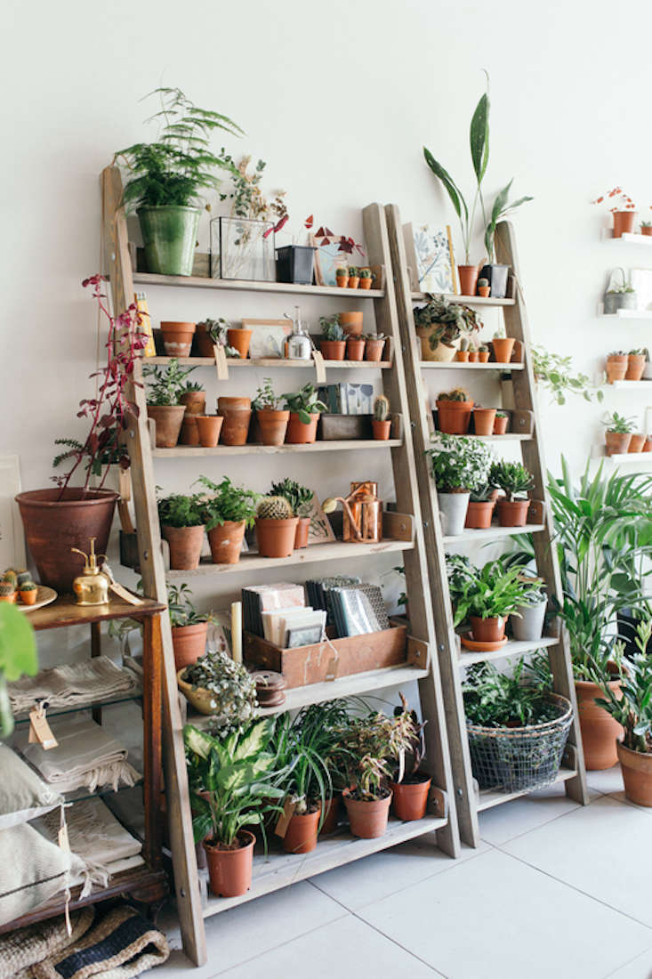 Spruce Ladder Plant Shelves Shelf