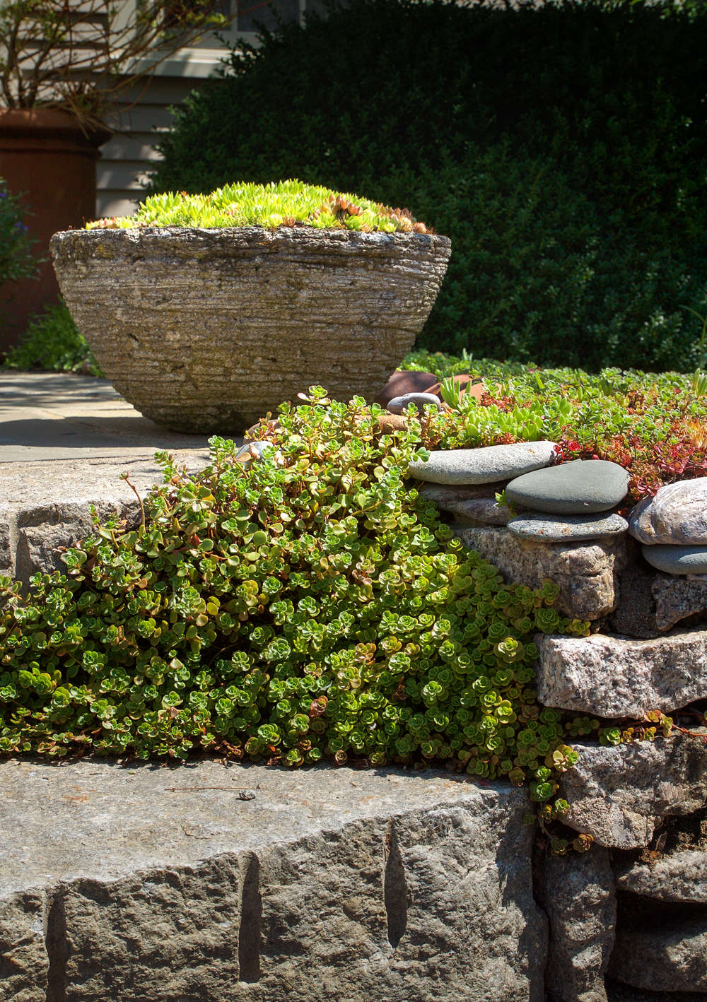 10 Garden Ideas to Steal from Provincetown on Cape Cod - Gardenista