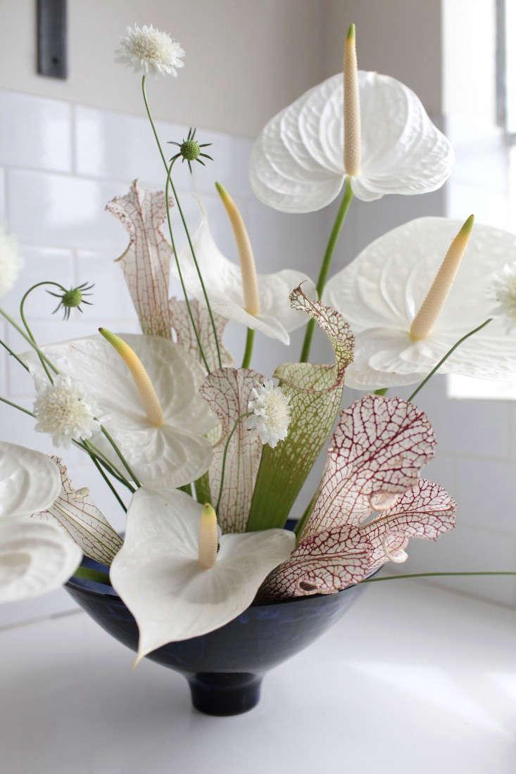 gardenista anthuriums sophia moreno bunge 3