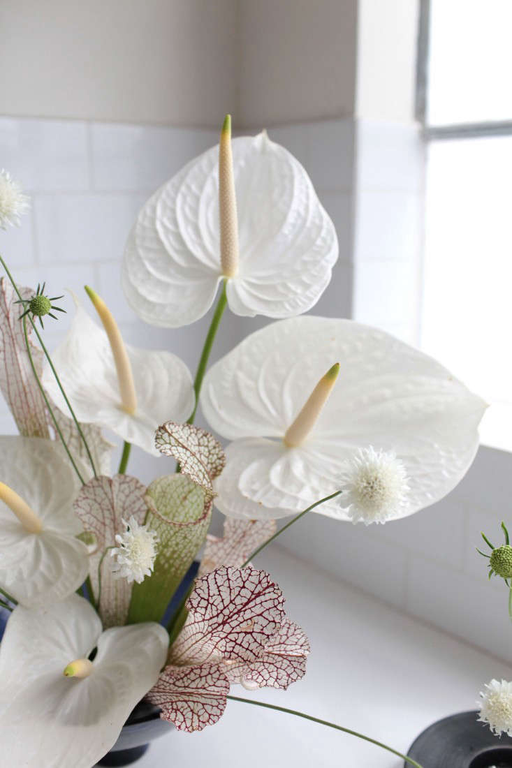 Gardenista-anthuriums-sophia-moreno-bunge-4