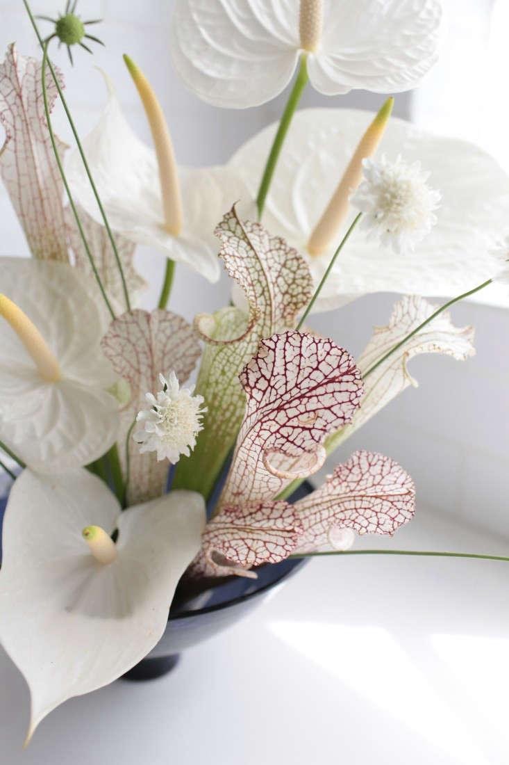 Gardenista-anthuriums-sophia-moreno-bunge-5