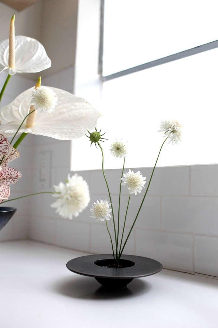 Gardening 101: Pincushion Flower