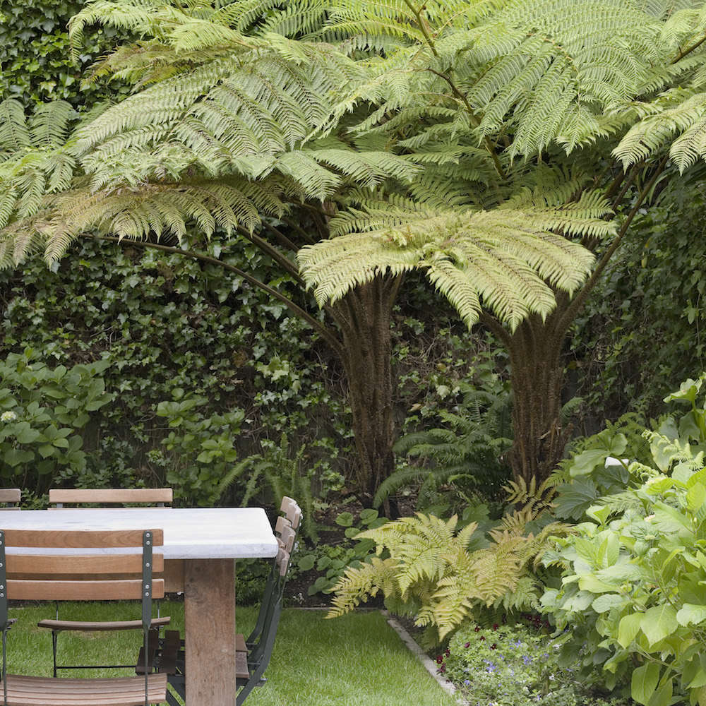 Scott Lewis Landscape San Francisco Garden | Gardenista