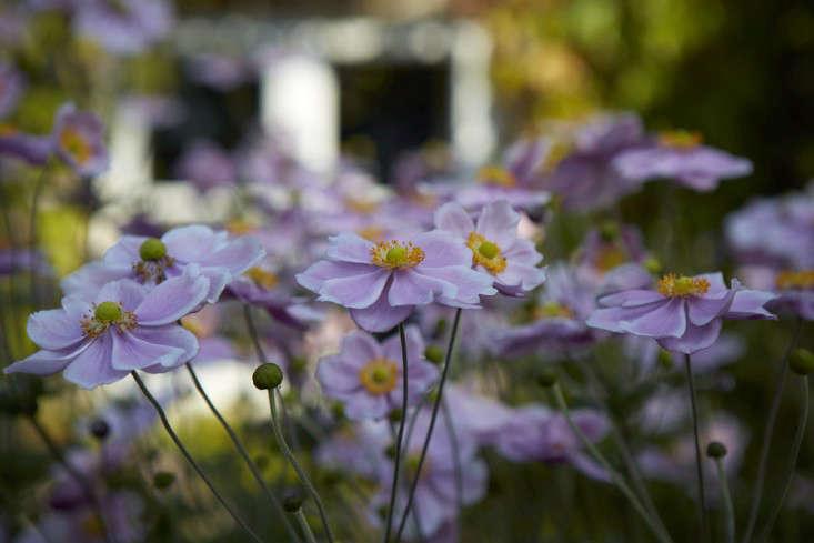anemones-white-britt-willoughby-dyer-gardenista-BN2A0148