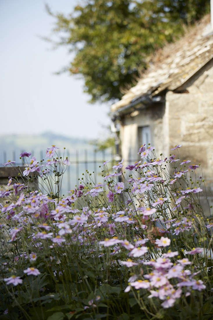 anemones-white-britt-willoughby-dyer-gardenista-BN2A0158