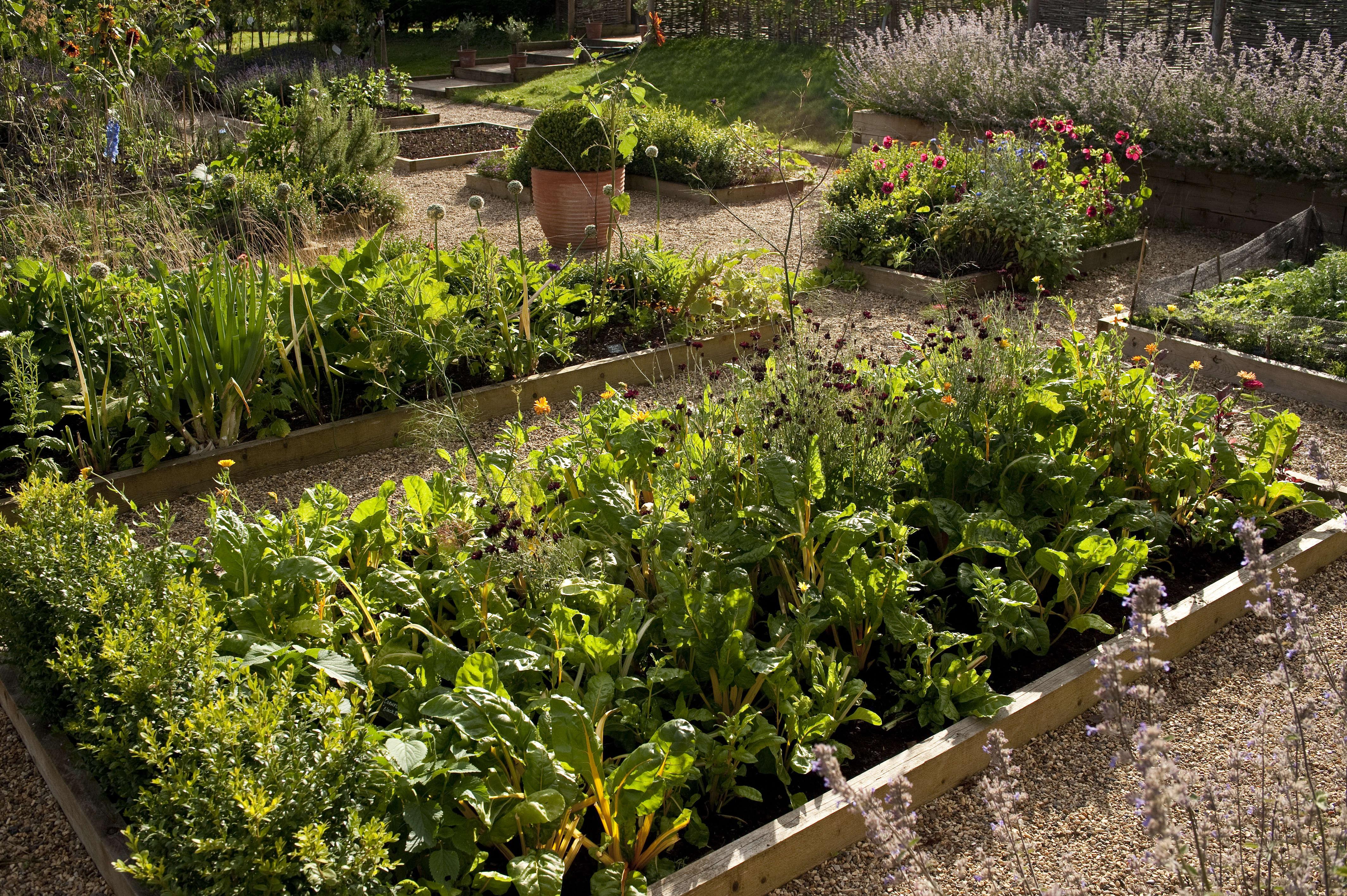 darsham_nurseries_raised_beds_kevin_foord_gardenista_KF11454
