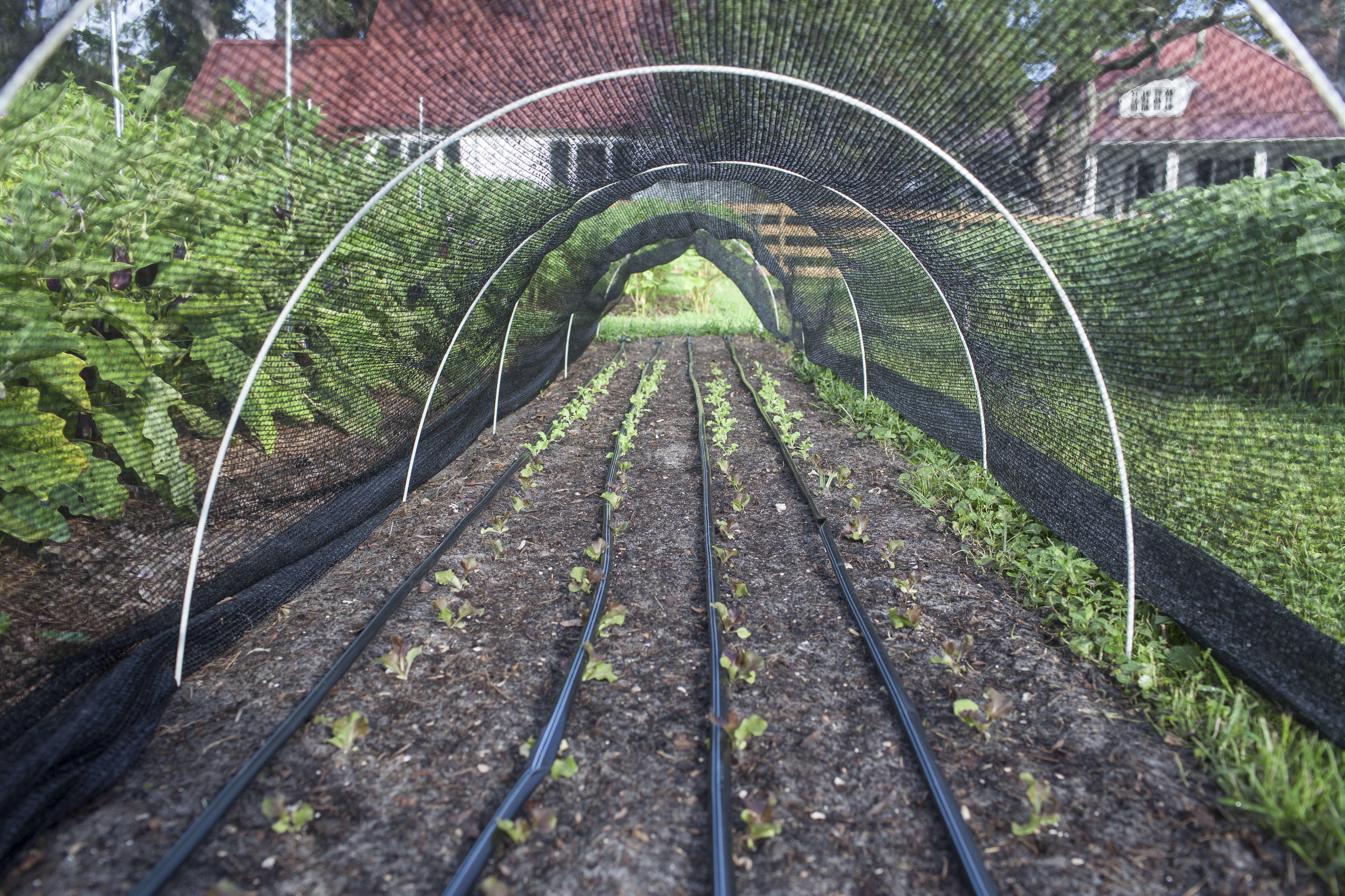 Greyfield Inn Lettuce Tunnels Hoops