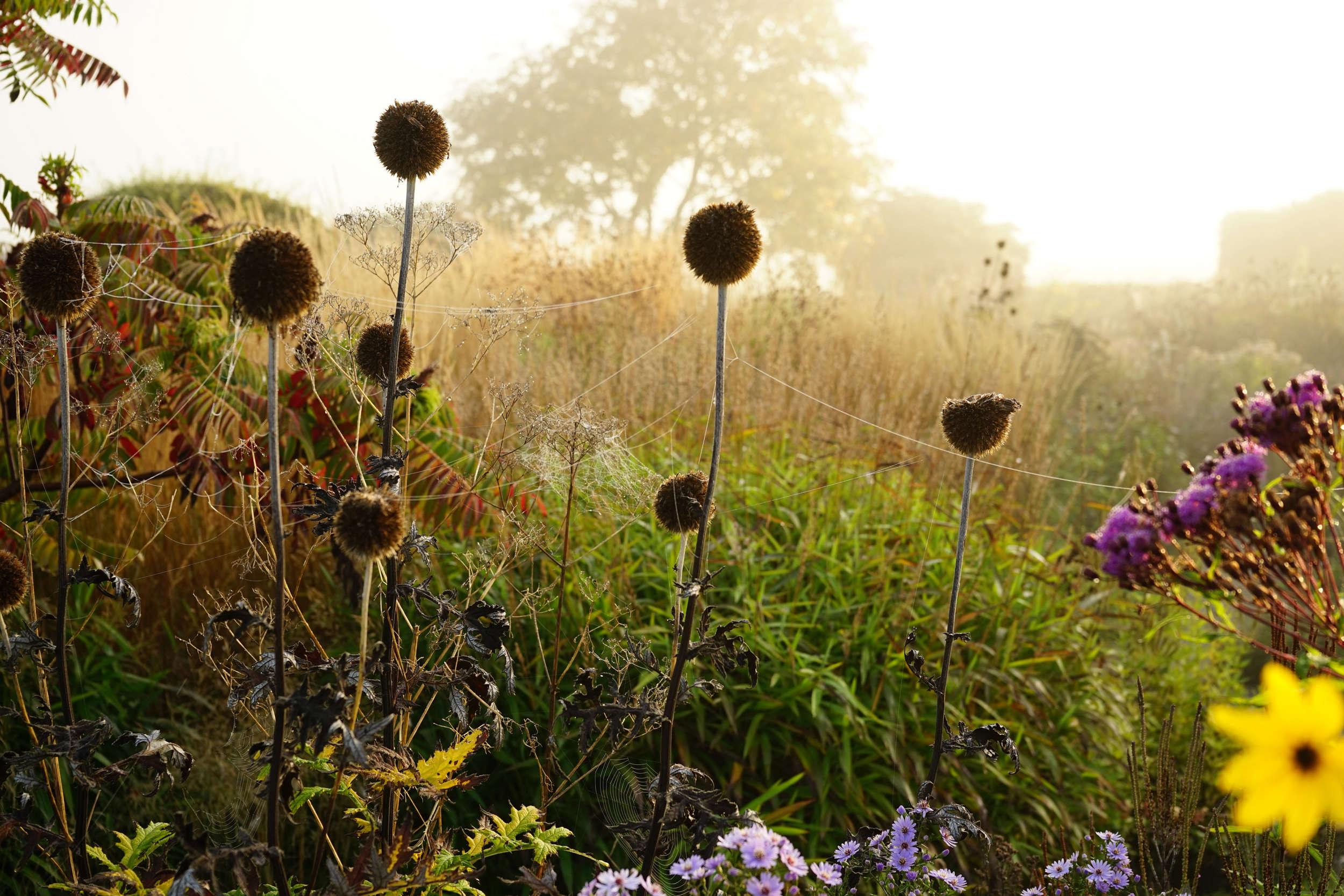 10 garden ideas to steal from superstar dutch designer piet oudolf