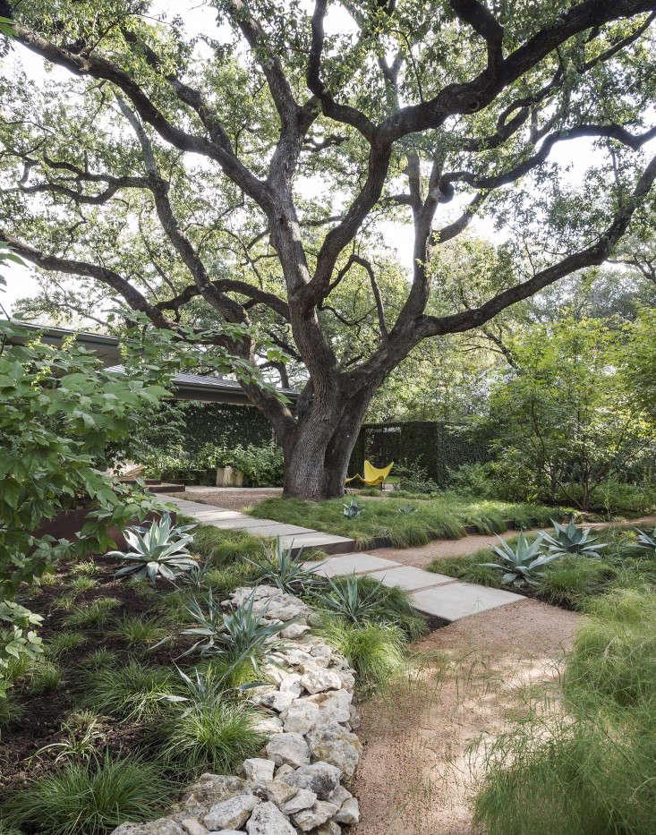 specimen_tree_live_oak_texas_ten_eyck_matthew_williams_gardenista_DSC_6142
