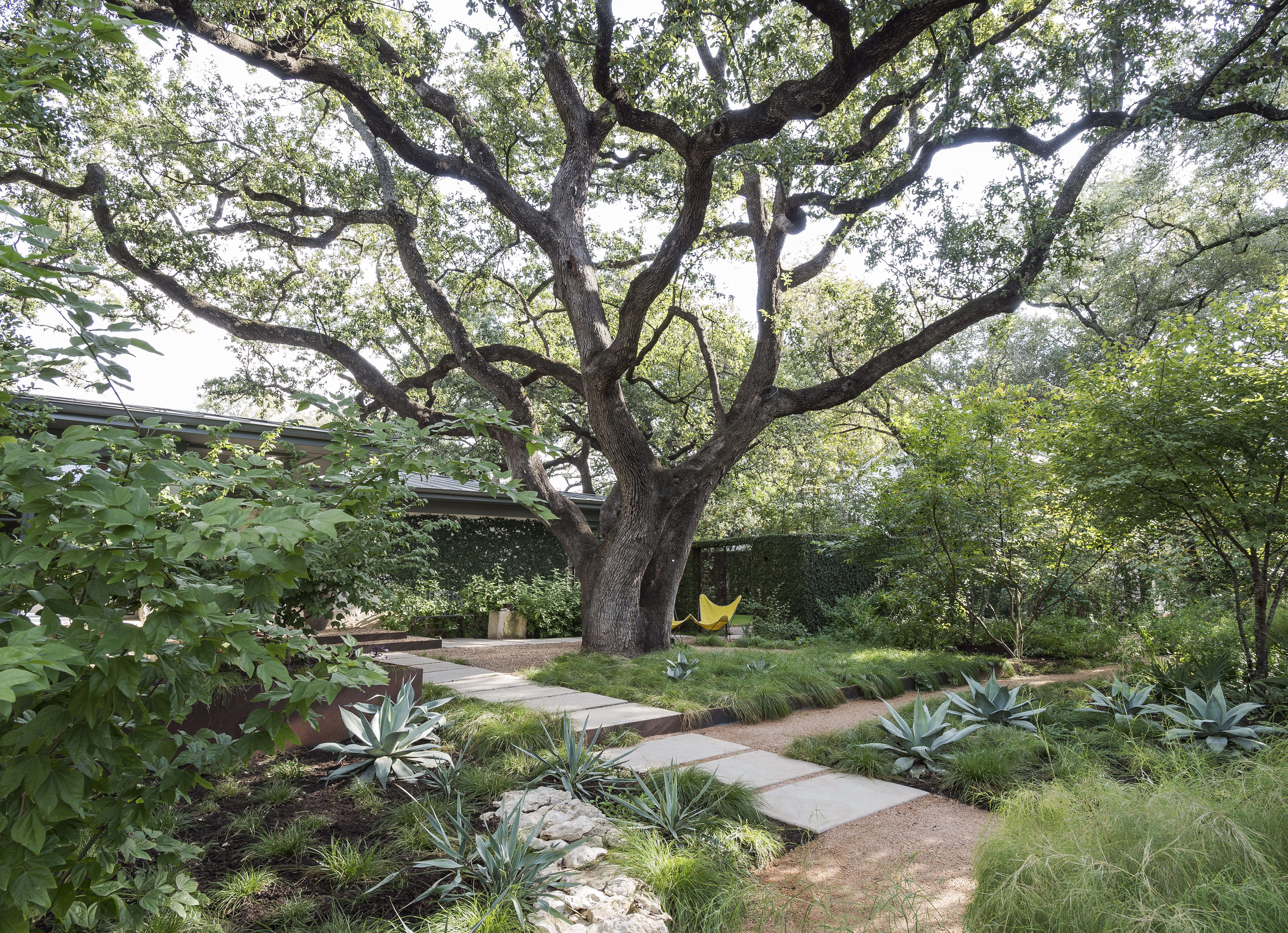 Specimen Trees Are They Worth It Gardenista