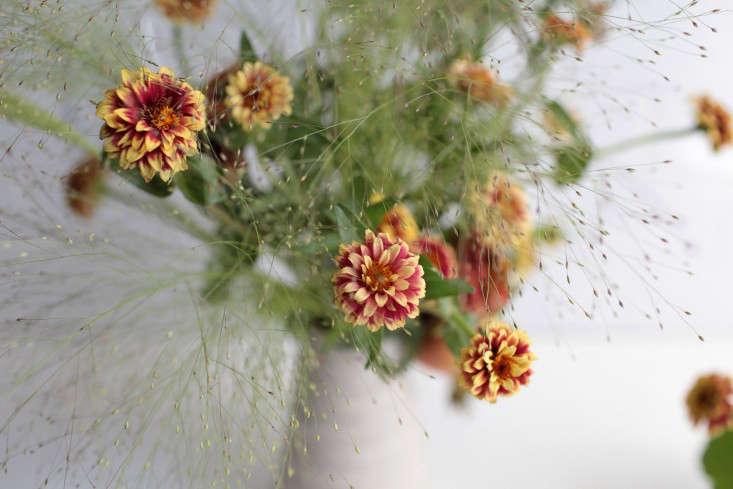 zinnias-sophia-moreno-bunge-gardenista-11