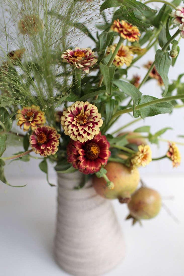 zinnias-sophia-moreno-bunge-gardenista-12