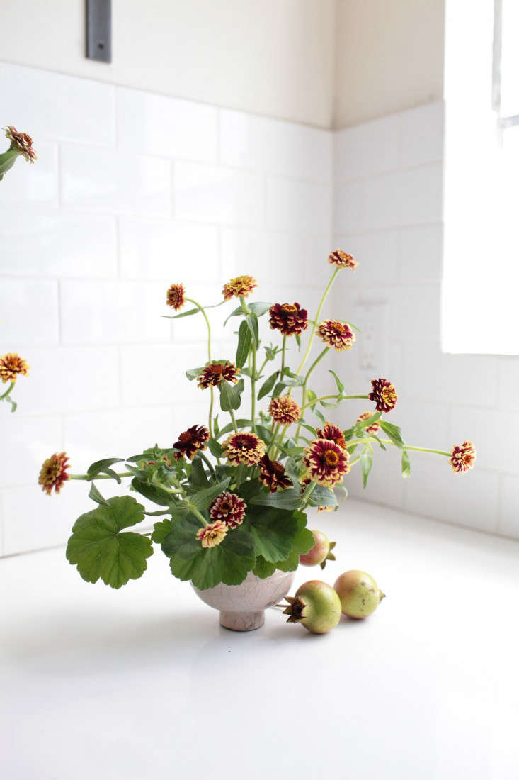 zinnias-sophia-moreno-bunge-gardenista-13