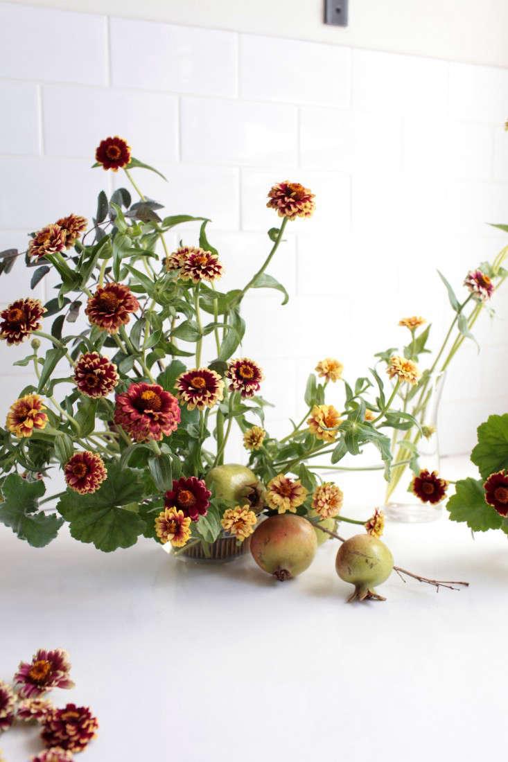 zinnias-sophia-moreno-bunge-gardenista-4