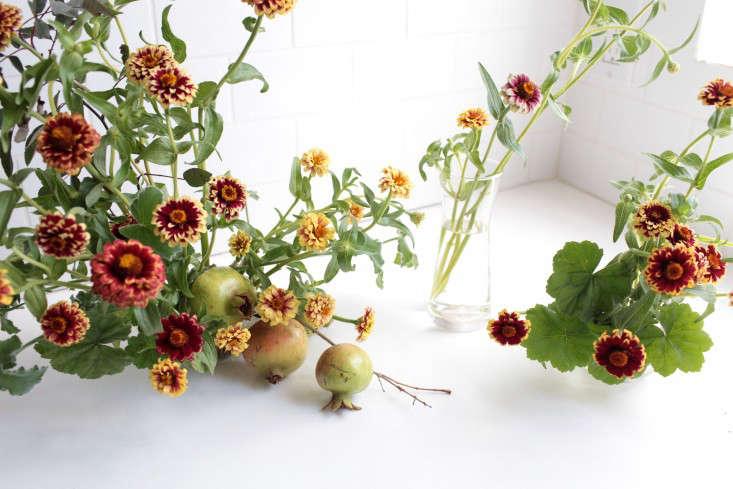 zinnias-sophia-moreno-bunge-gardenista-6