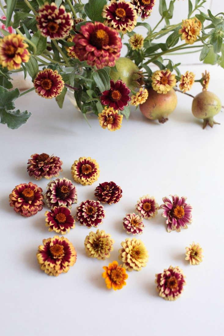 Zinnias: Rethinking a Farm Stand Flower