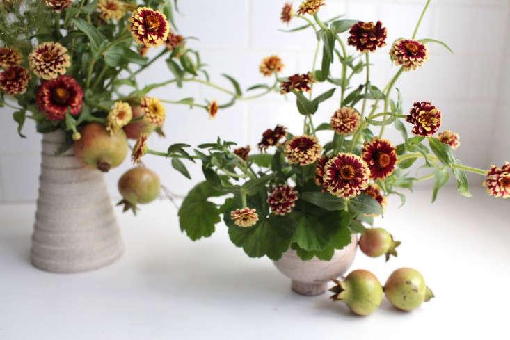 zinnias-sophia-moreno-bunge-gardenista-9