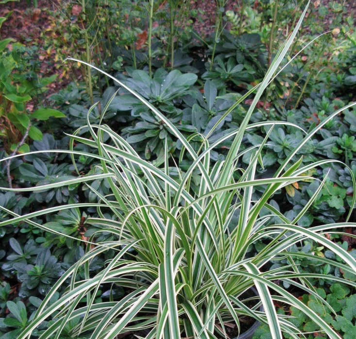Perennial Grasses Illinois : Perennial grasses posts and lawn alternative on