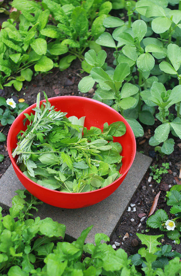 23 and Me: My Favorite Edible Plants to Grow in Shade ...