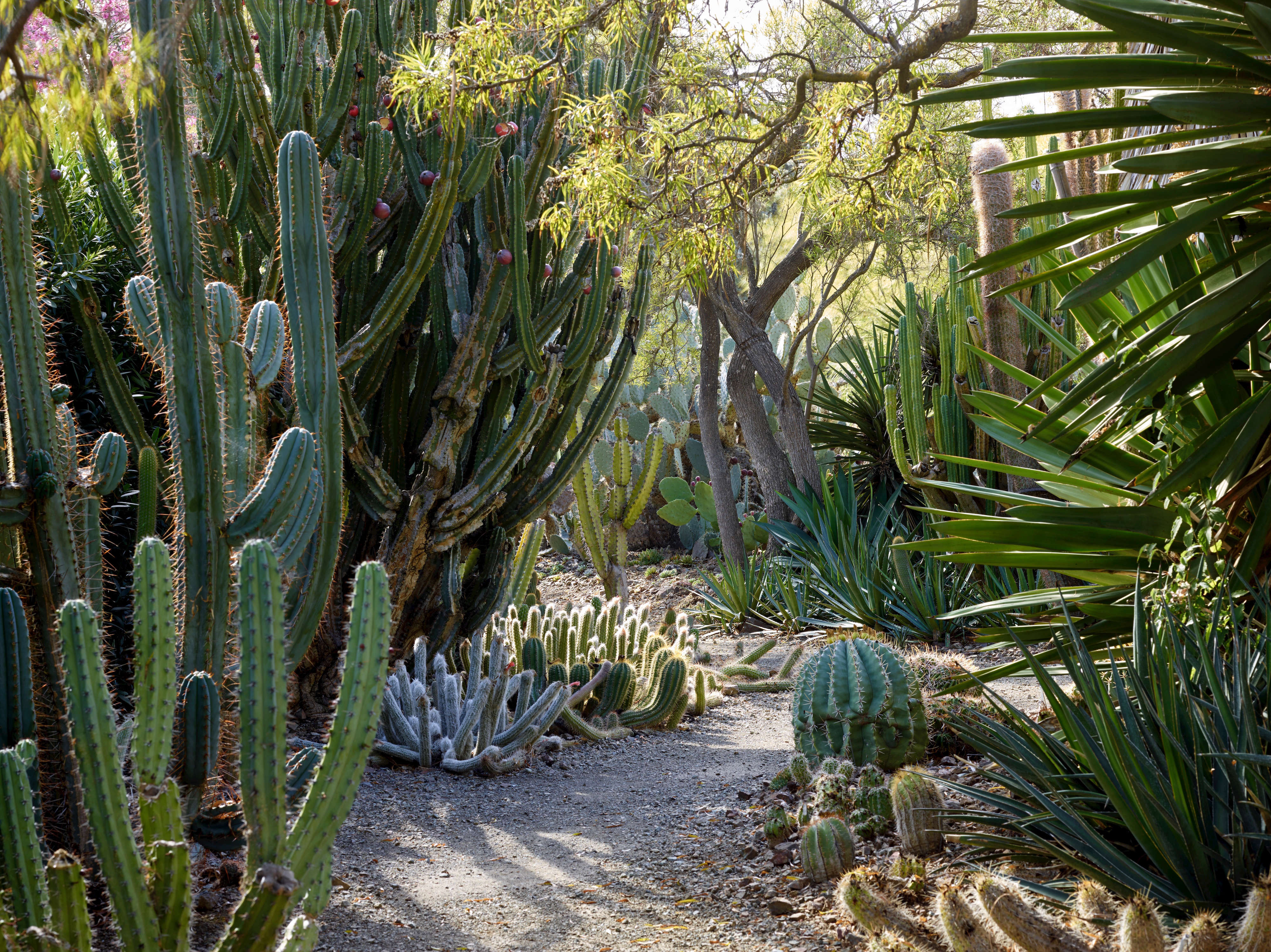 Required Reading Ruth Bancrofts Bold Dry Garden Gardenista
