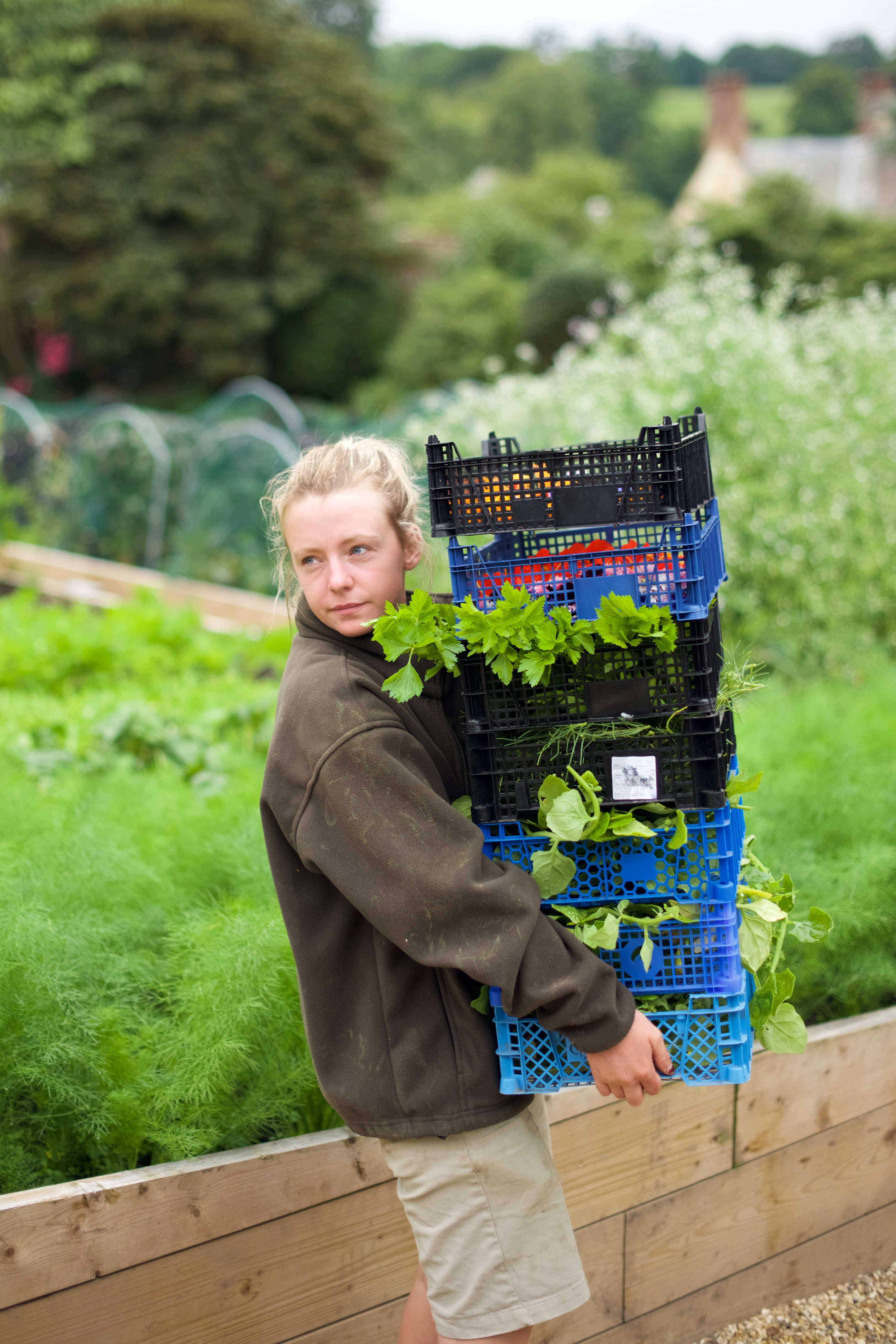 Gardener, The Pig, Combe
