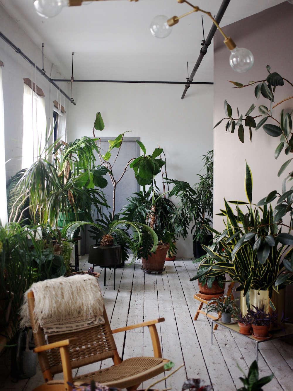 The Accidental Jungle Shabd Simon Alexander S Houseplants