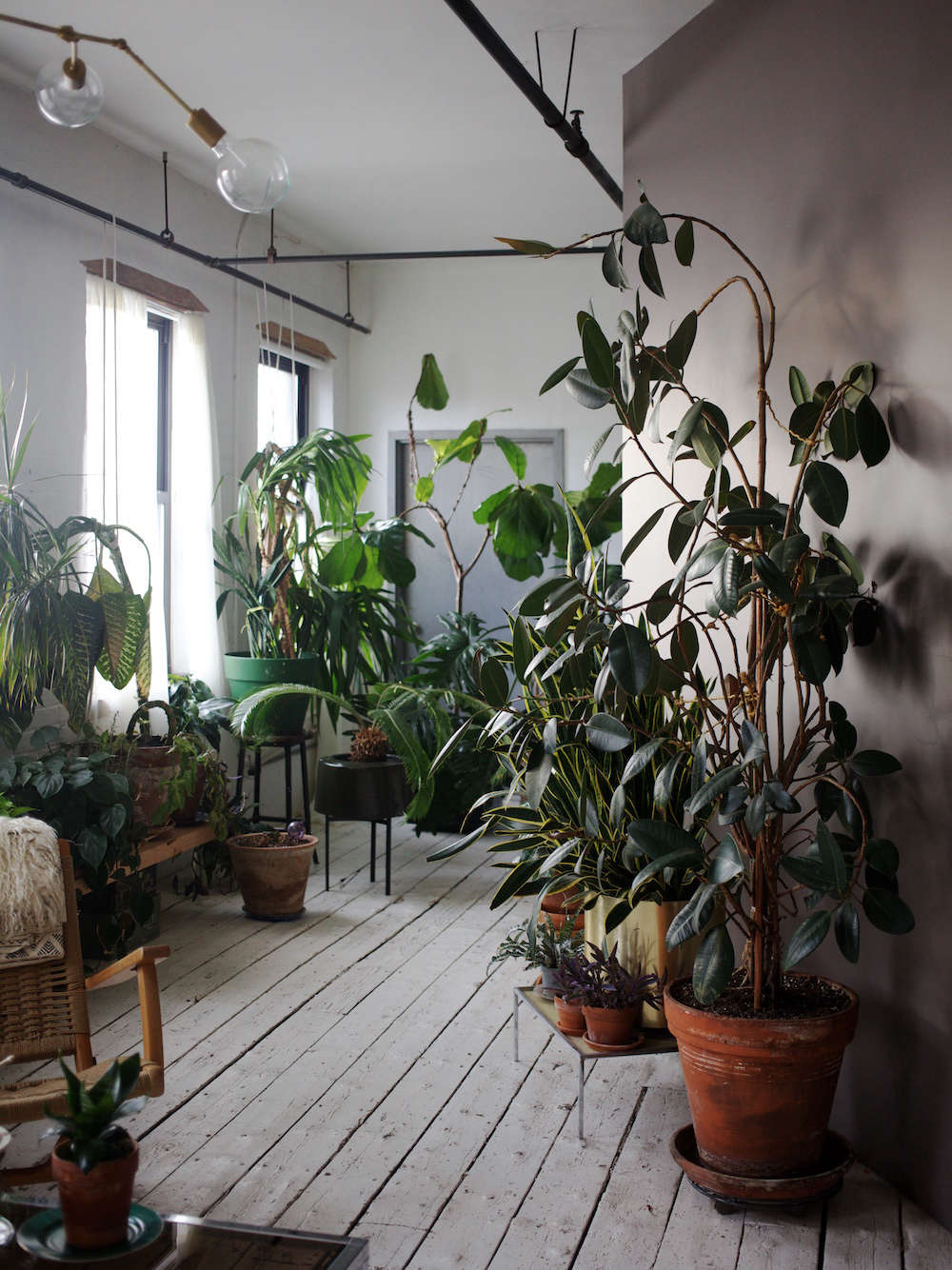 the accidental jungle: shabd simon-alexander's houseplants in a