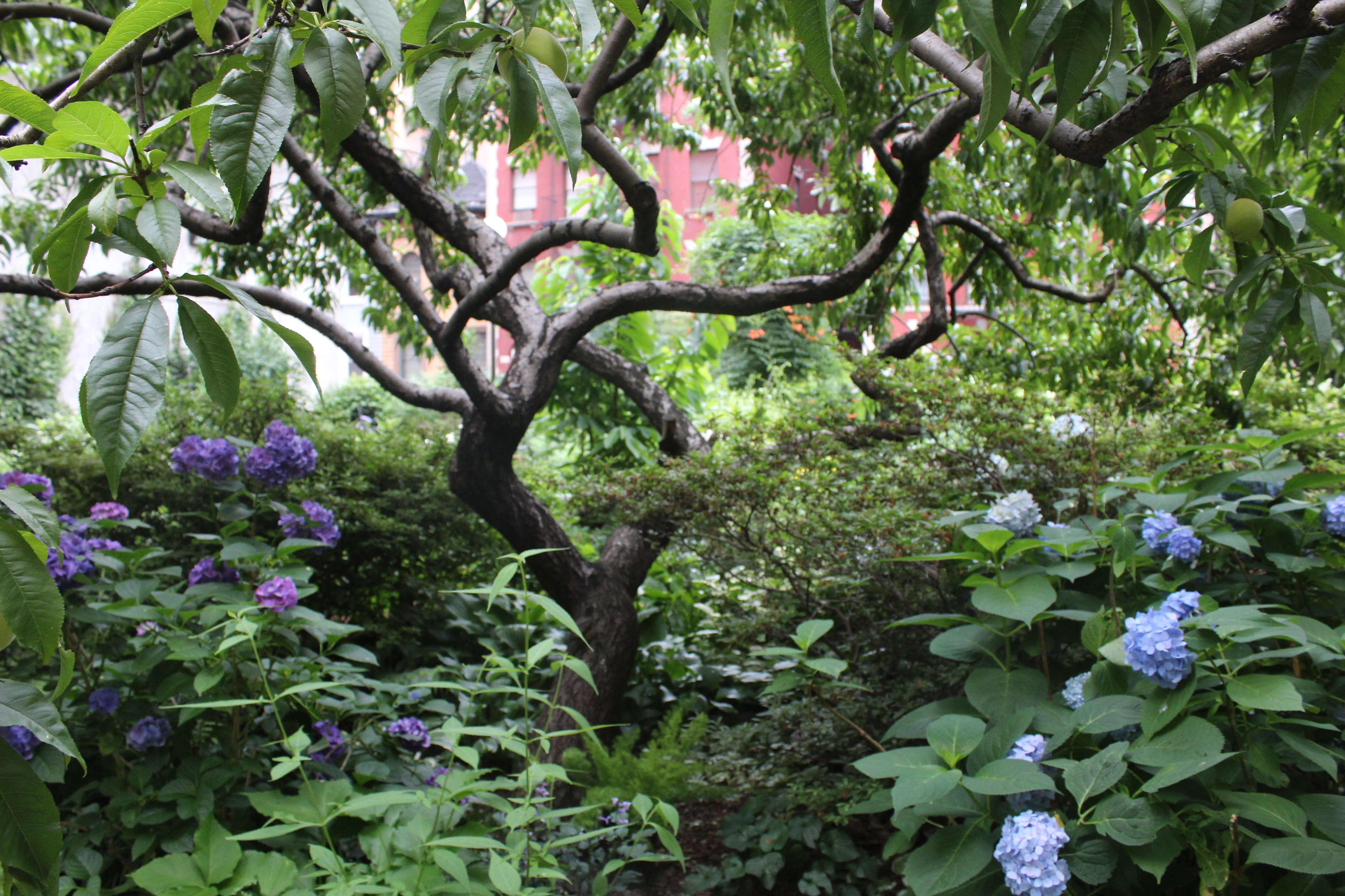 My Garden Story A Secret Rooftop Oasis On Manhattan S