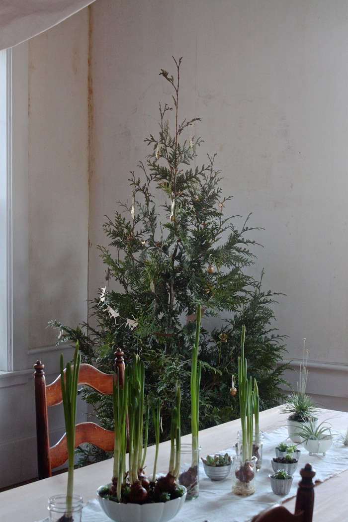 Diy Plant Your Christmas Tree In The Garden Gardenista
