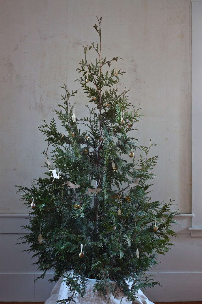 DIY: Plant Your Christmas Tree in the Garden - Gardenista