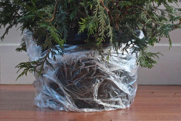 DIY: Plant Your Christmas Tree in the Garden: Gardenista
