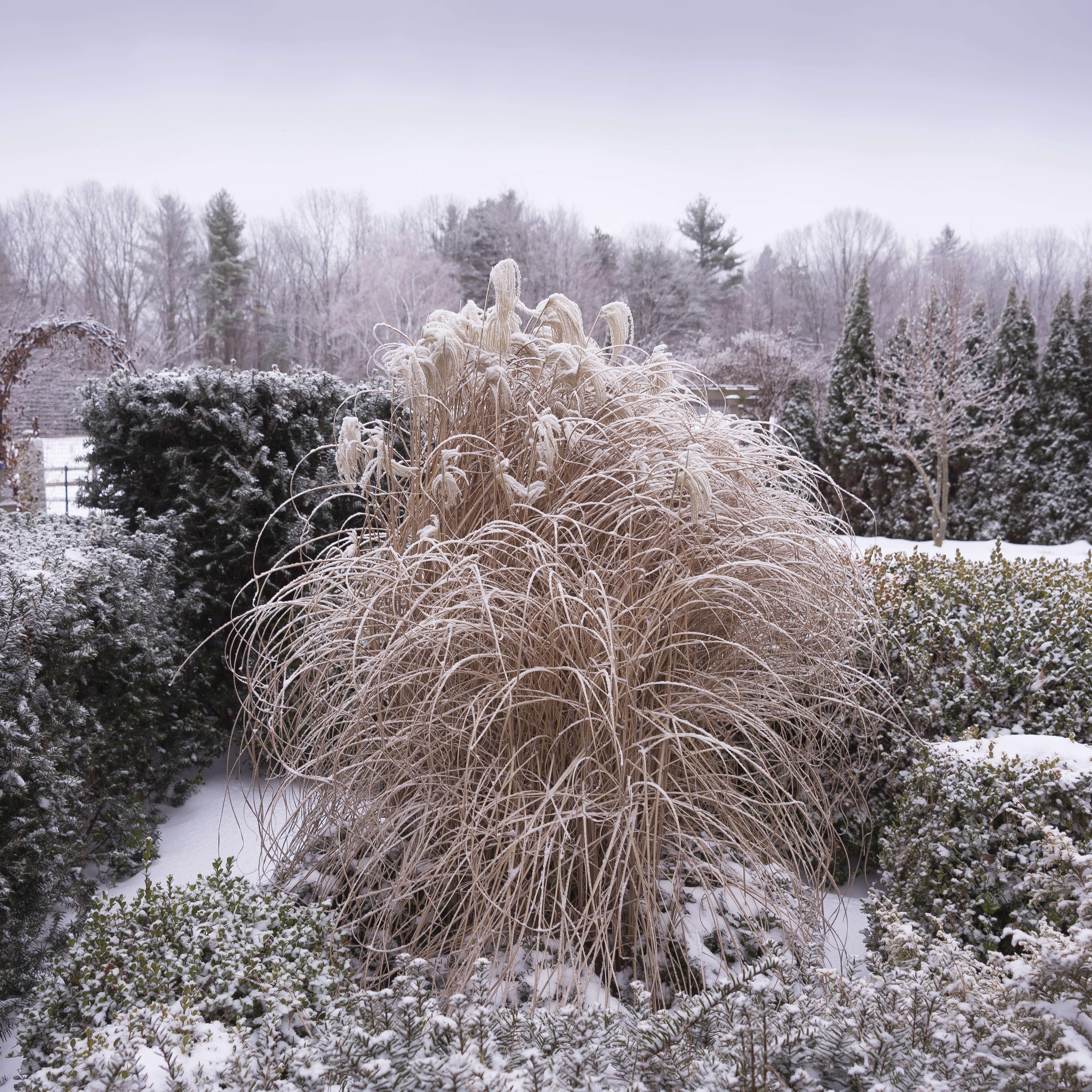 Garden Visit: At Home At Juniper Hill Farm In New