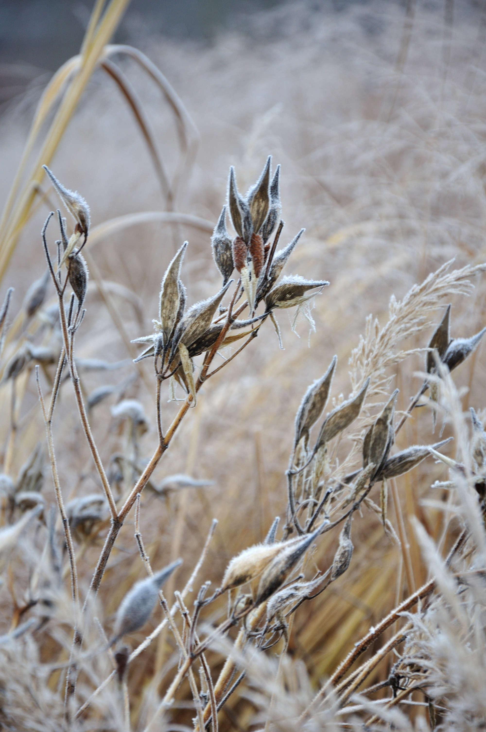 gardening 101 milkweed gardenista sourcebook for outdoor