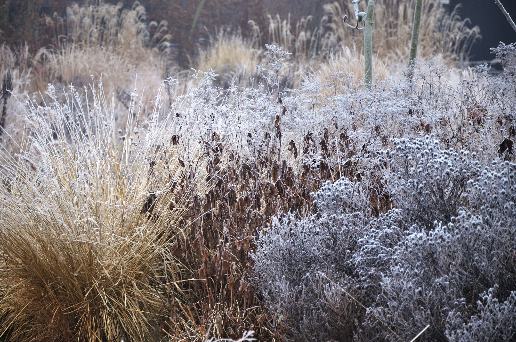 Expert advice 9 tips for a colorful winter garden for Winter garden