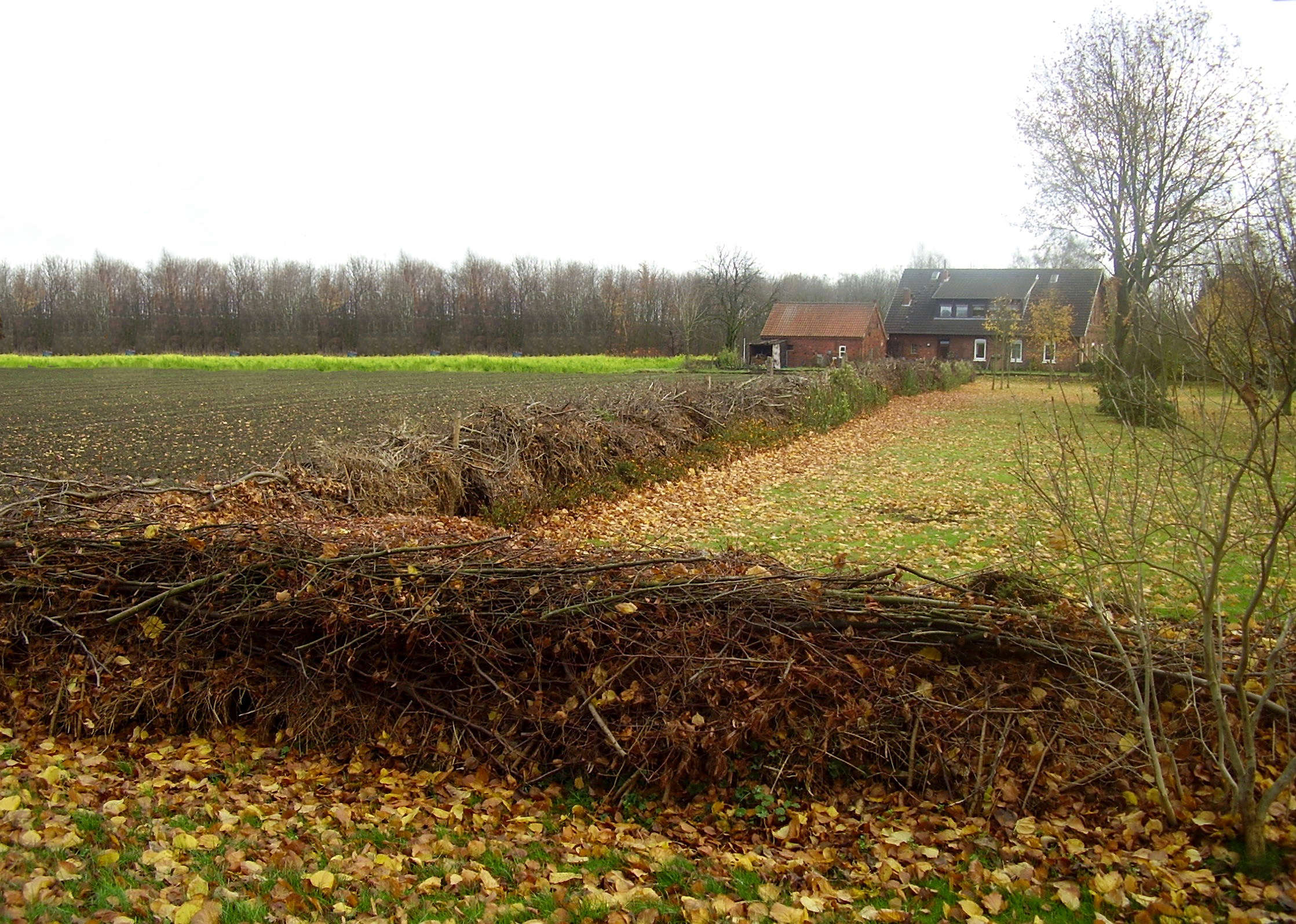 above a time honored tradition in europe dead hedges have a long history in agriculture peasants simply cut off their cuttings as a border marker
